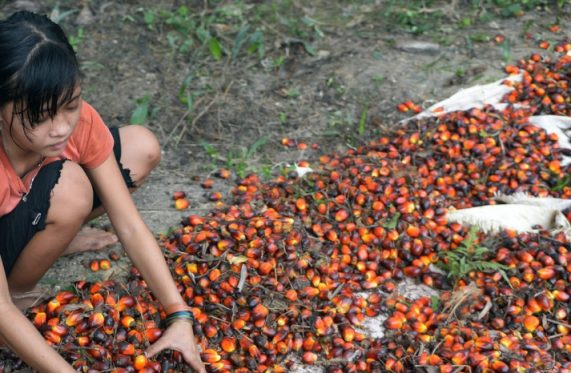 Il est aussi fait mention de la – désolante – persistance de l' exploitation des enfants dans le cycle de production de cette plante dévastatrice.