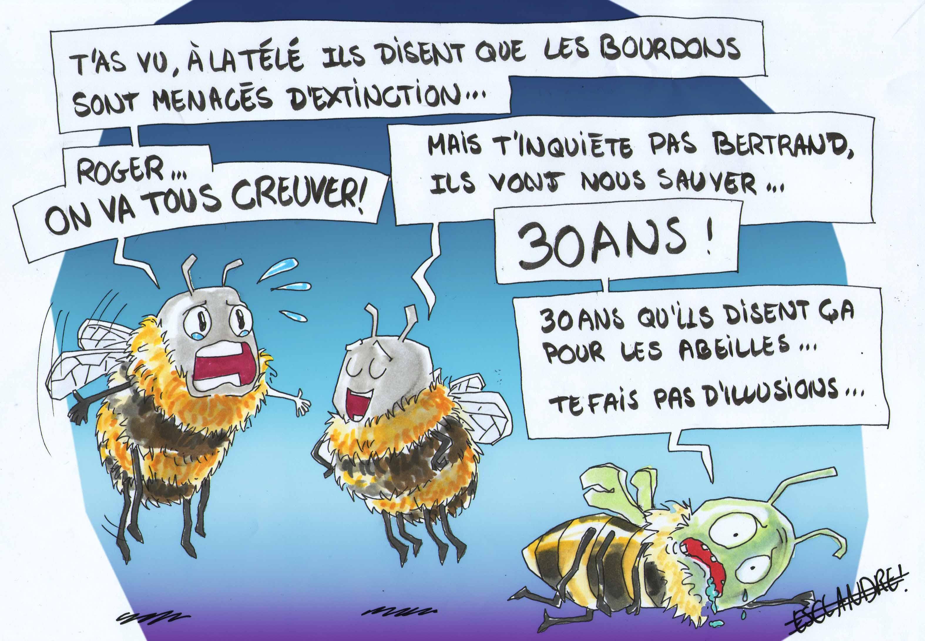 Que pensent les abeilles de l' extinction des bourdons ?